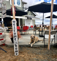 Highland Valley Vineyards Christmas Market 2018 - 3: Nate the winery dog!