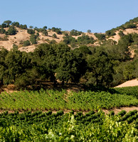Napa-Valley-CA-Landscape_Stags-Leap_CRW_2312 crop